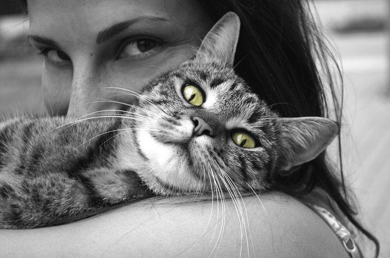 4 октября - Всемирный день защиты животных / Фото: pixabay.com