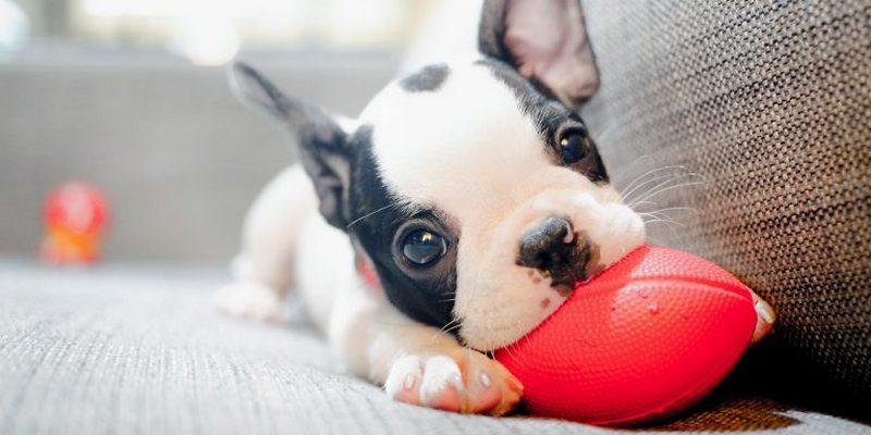 Снимок носит иллюстративный характер / Фото: MAXXSIPHOTO / Shutterstock