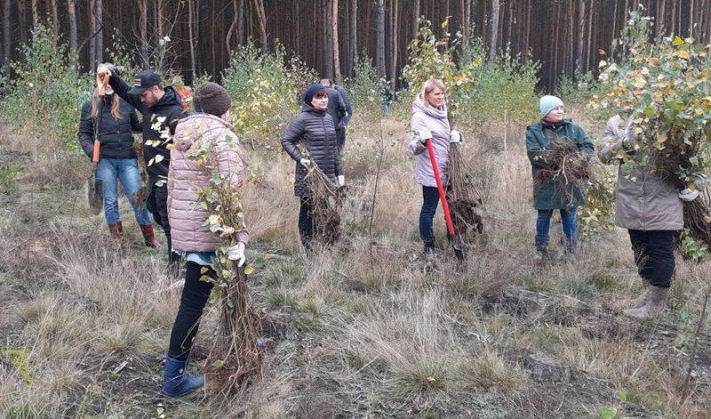 Фото Пинского лесхоза