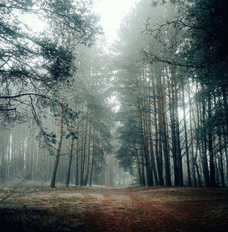 Сказочный лес @leo_lana23