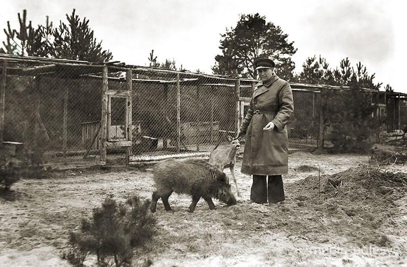 У вольеров с дикими животными