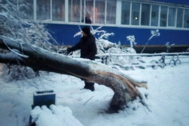В Микашевчах на ул.Молодежной, 7Б упавшее дерево перекрыло вход в подъезд. Фото из соцсетей