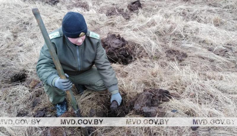 В январе 2020 года 260 снарядов, гранат и мин нашли под Пинском / Фото: БелТА