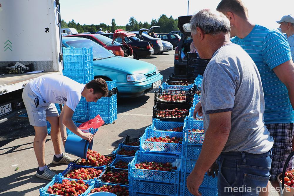Фоторепортаж о том, как люди пытаются заработать на самом большом в стране клубничном рынке