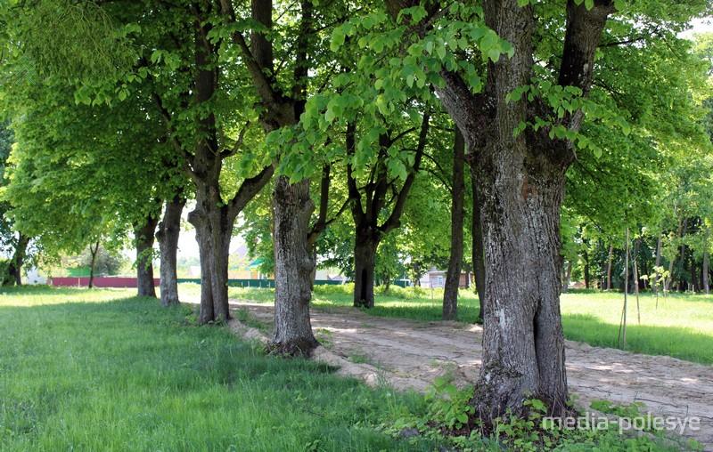 Липовая аллея в Нижне-Теребежовском парке